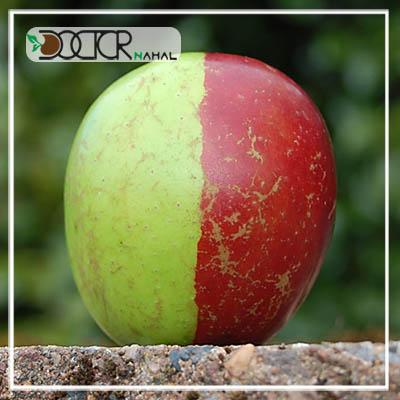 نهال سیب دو رنگ