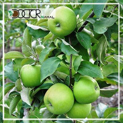 نهال سیب سبز