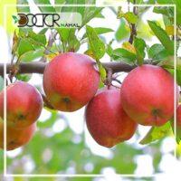 نهال سیب گلاب