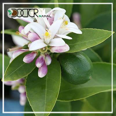 نهال لیمو عمانی