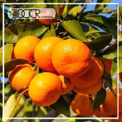 نهال نارنگی معمولی