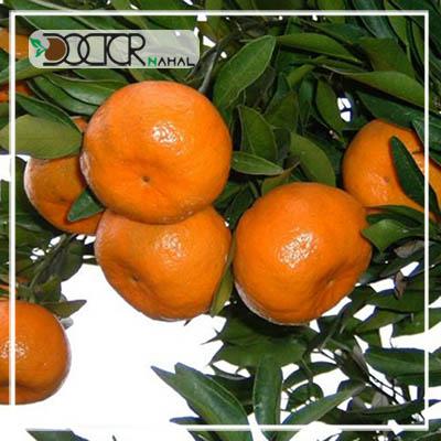 نهال نارنگی پیچ