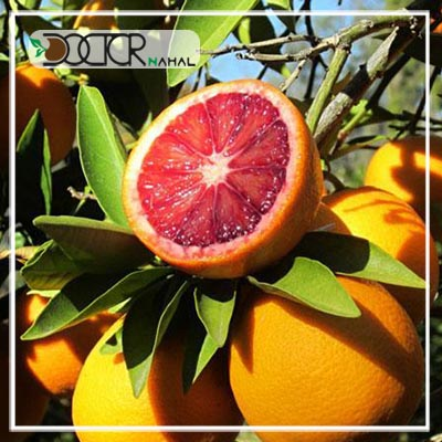 نهال پرتقال خونی