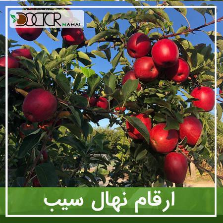 نهال_سیب