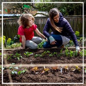 احداث باغ گردو